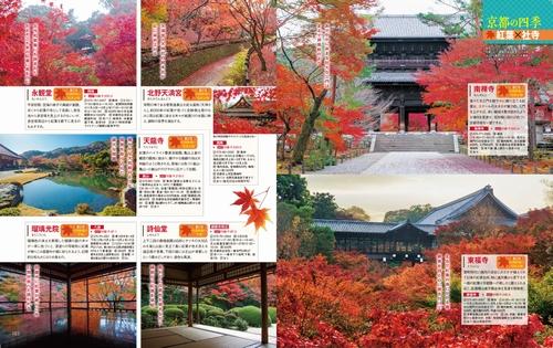 京都パーフェクト